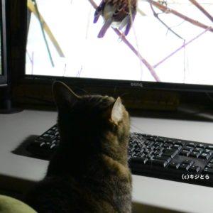 猫のための娯楽動画に猫首ったけ!