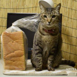 【猫雑学】香箱座りを英語で言うと・・・パン?