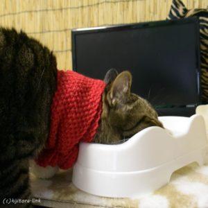猫のご飯のお皿をデッカイのにしてみた結果