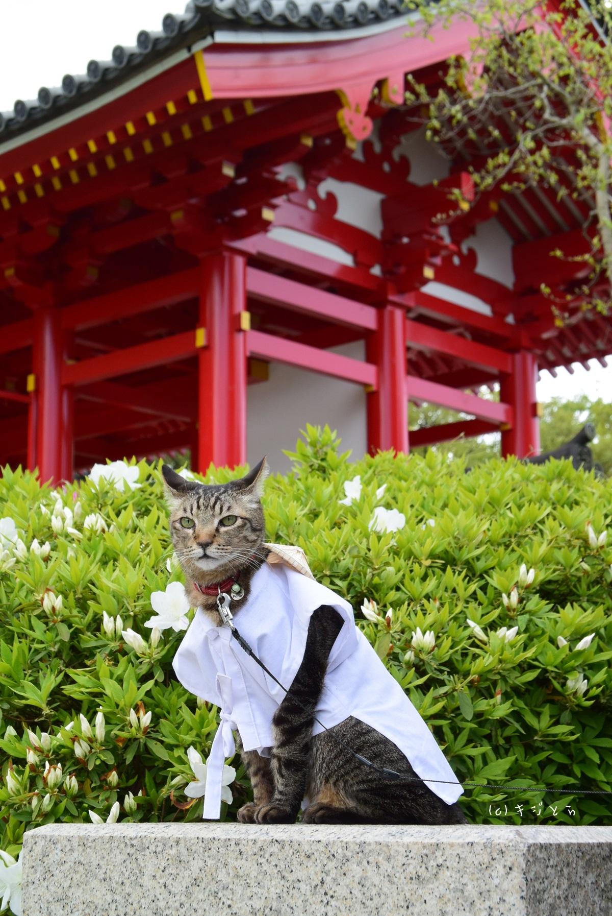 屋島寺の前の猫