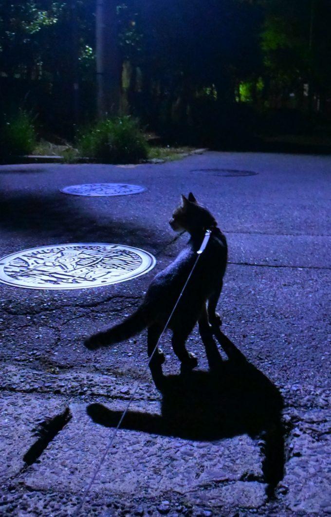 猫の夜散歩