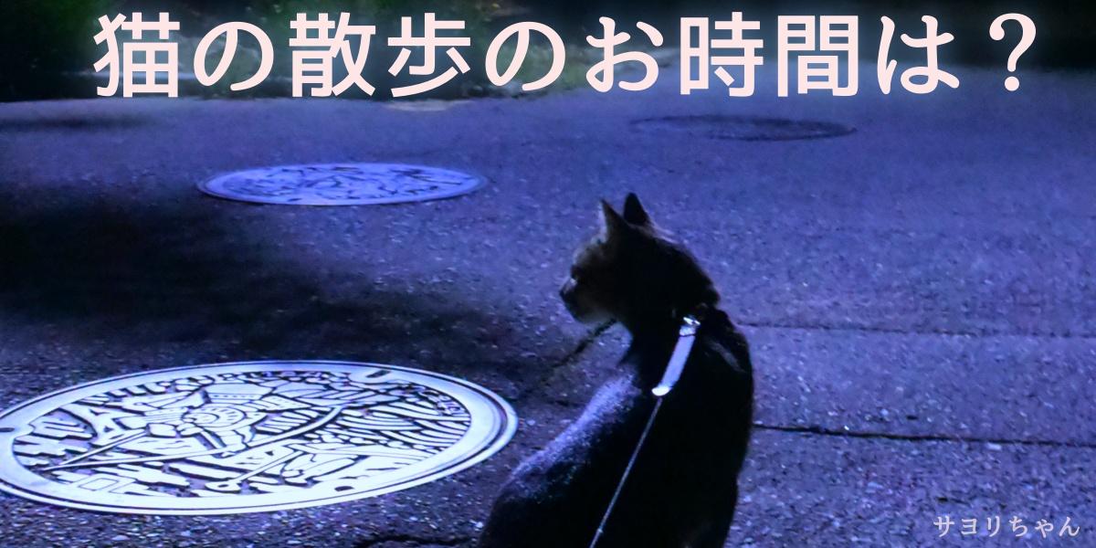 猫の散歩のお時間は