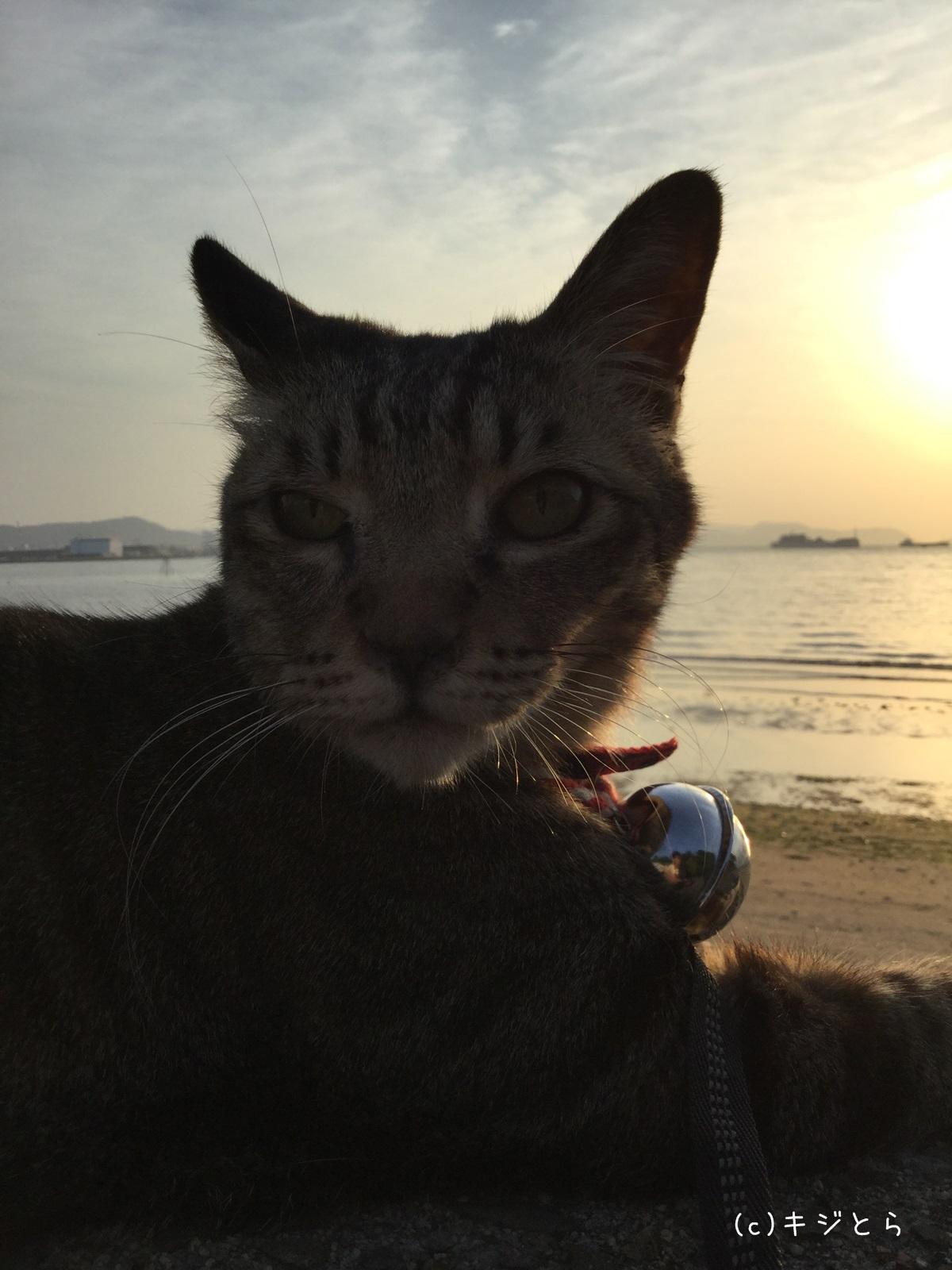 砂浜を歩く猫_017