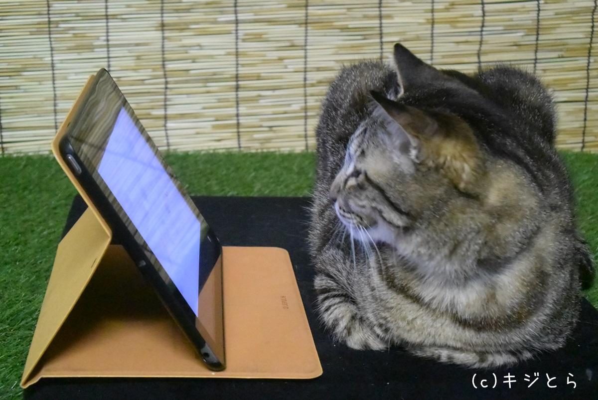 iPadをガン見