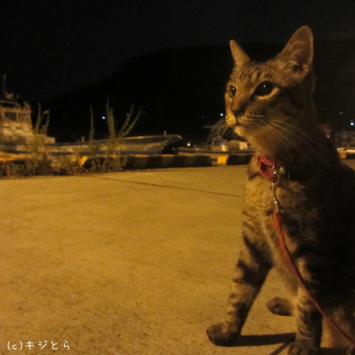 夜の港でみつめる猫