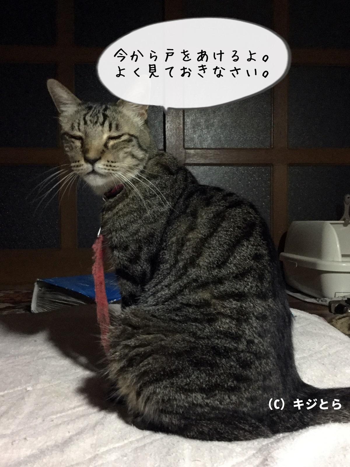 今から戸を開ける猫