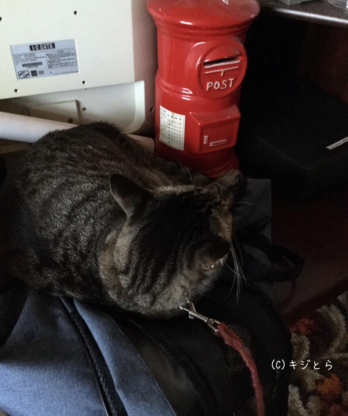 台風なのに寝ている猫