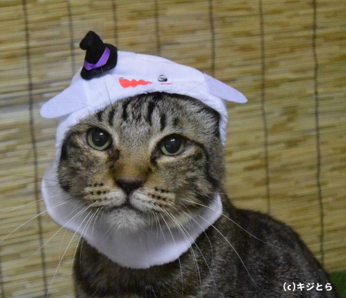 「どれも可愛いと思ったよ。中でもおばけが一番だね。キジトラ柄に白色が合うんだよね。他の柄の猫ちゃんだったら違う色が合うんだろうね。」