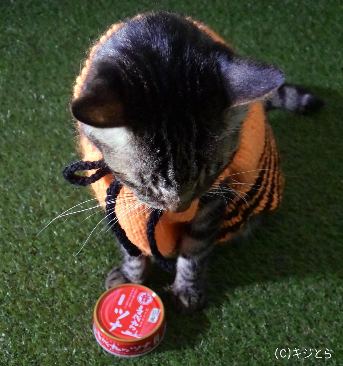 猫とツナ缶
