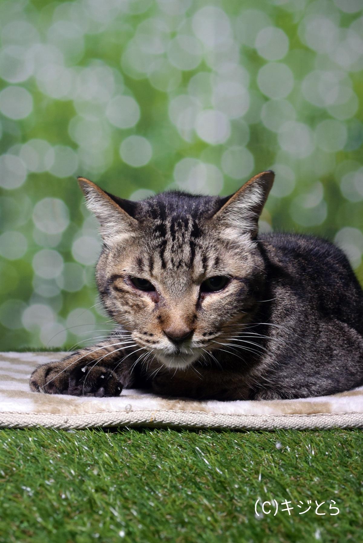 ホットカーペットの上で幸せそうな猫