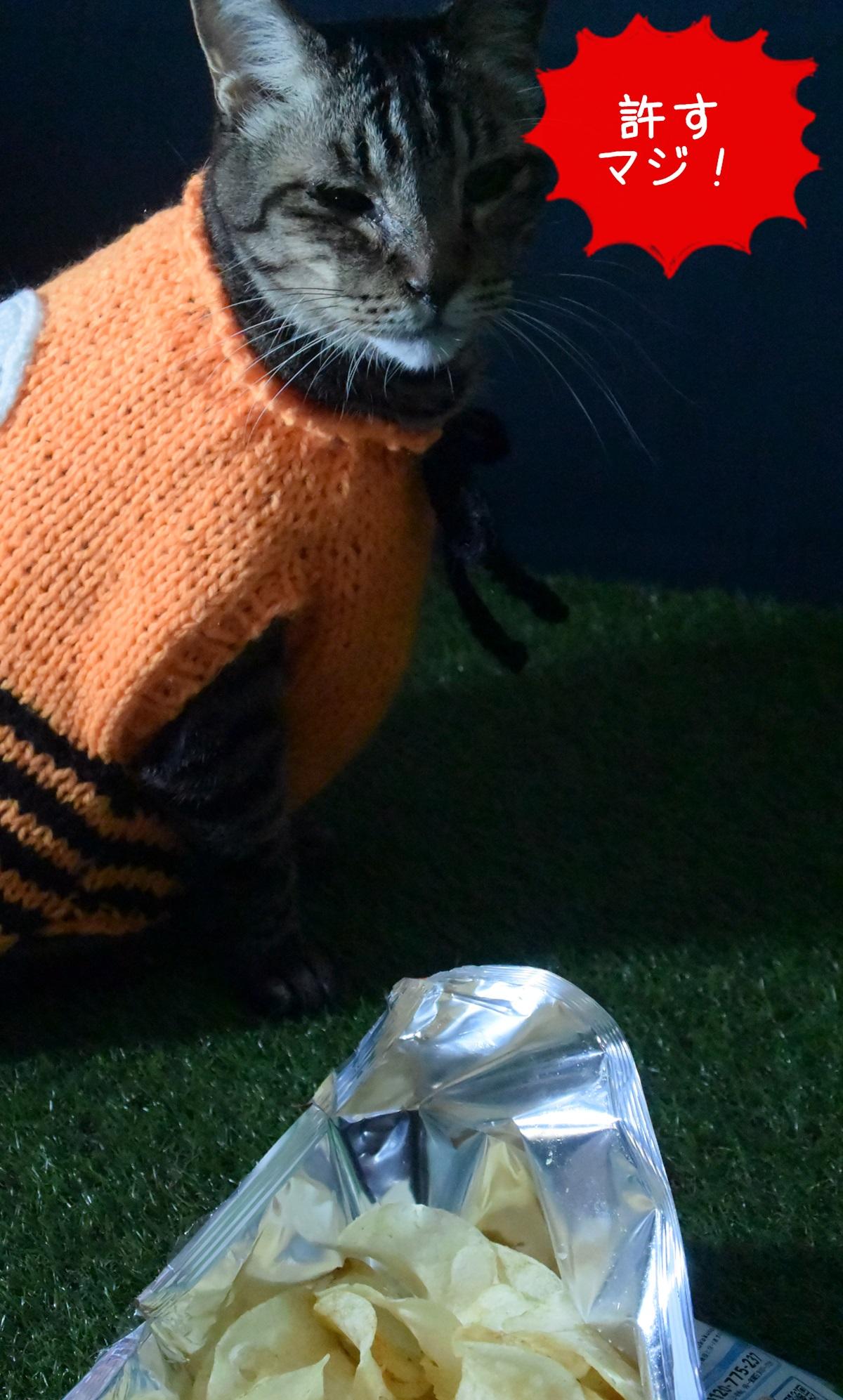 ポテトチップスを見つけた猫