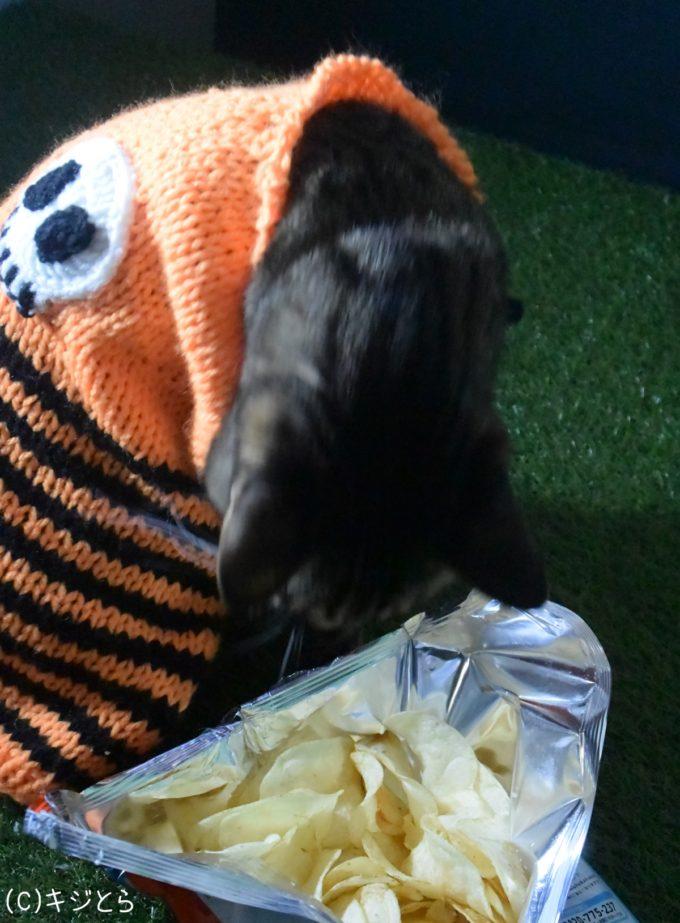 ポテトチップスを近くで見る猫