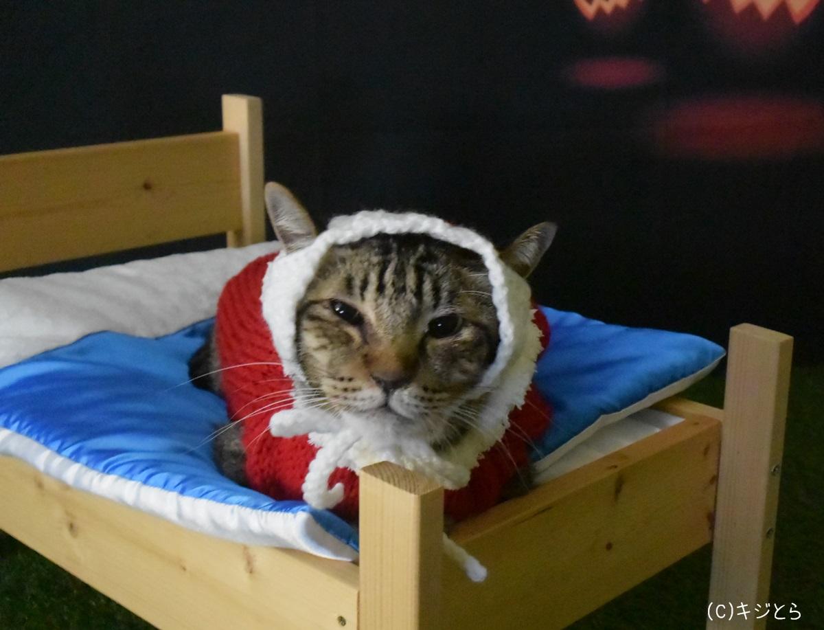 猫の手編みのヘッドドレス_000