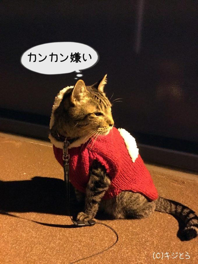 踏み切りの音が嫌いな猫