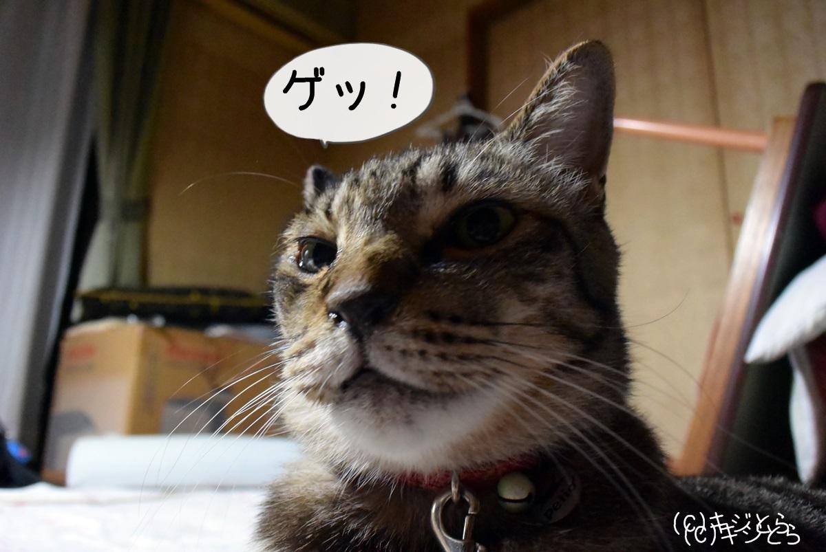 猫 ゴキブリホイホイ