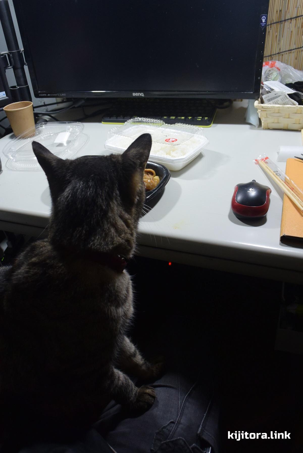 ほっともっとのしょうが焼き弁当を狙う猫