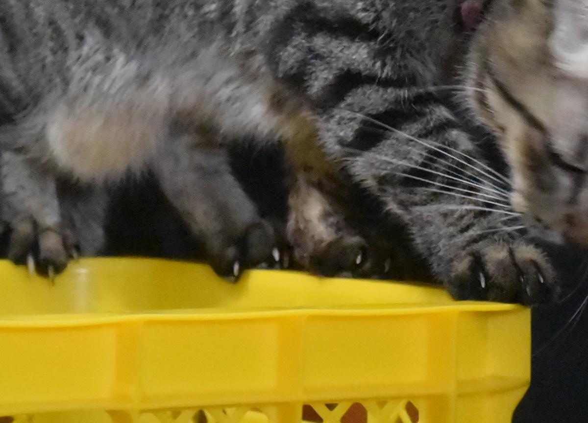 わが家の泥棒猫(足元アップ)