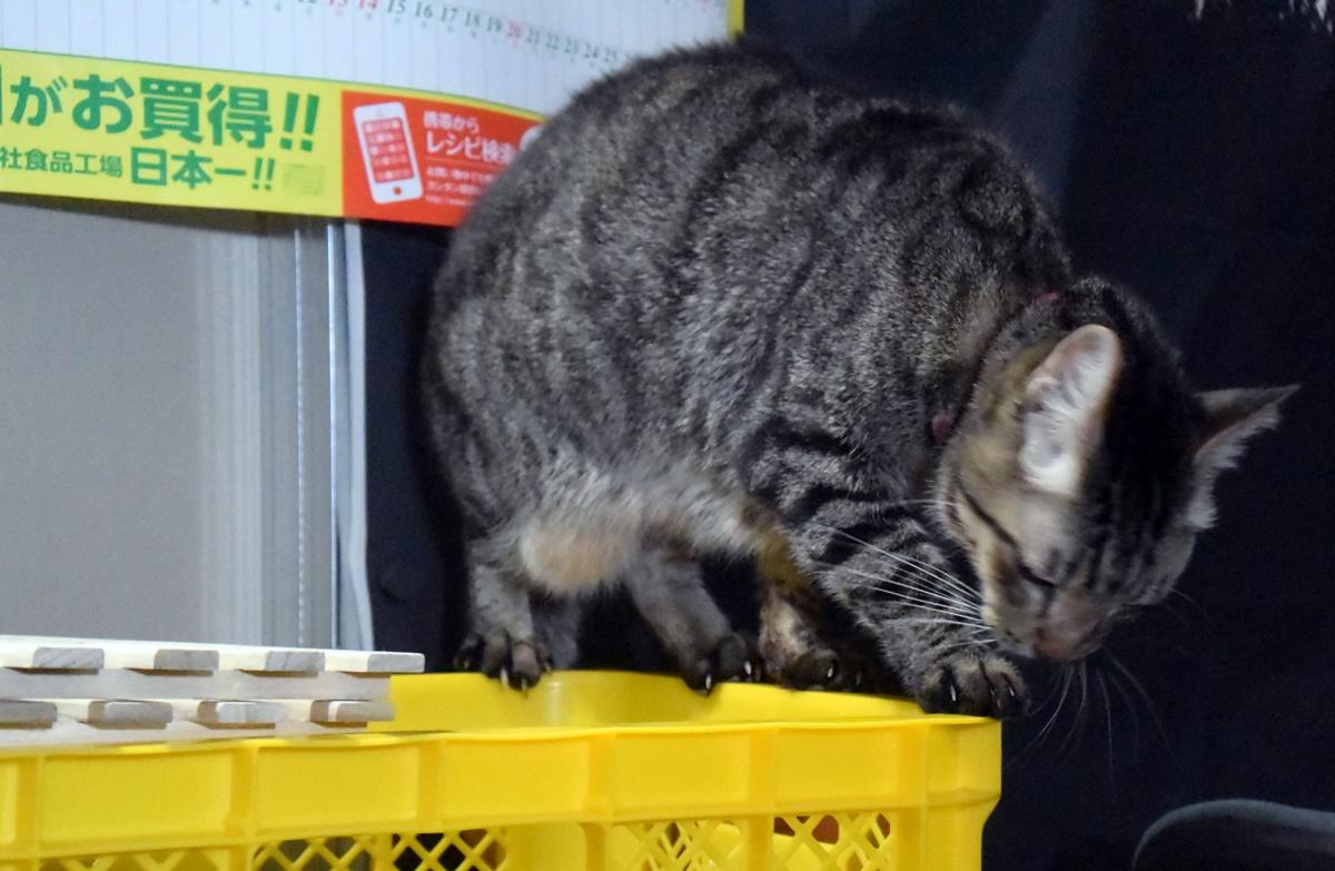 わが家の泥棒猫