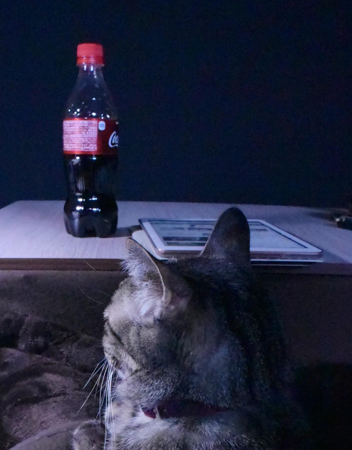 コカ・コーラを見つめる猫