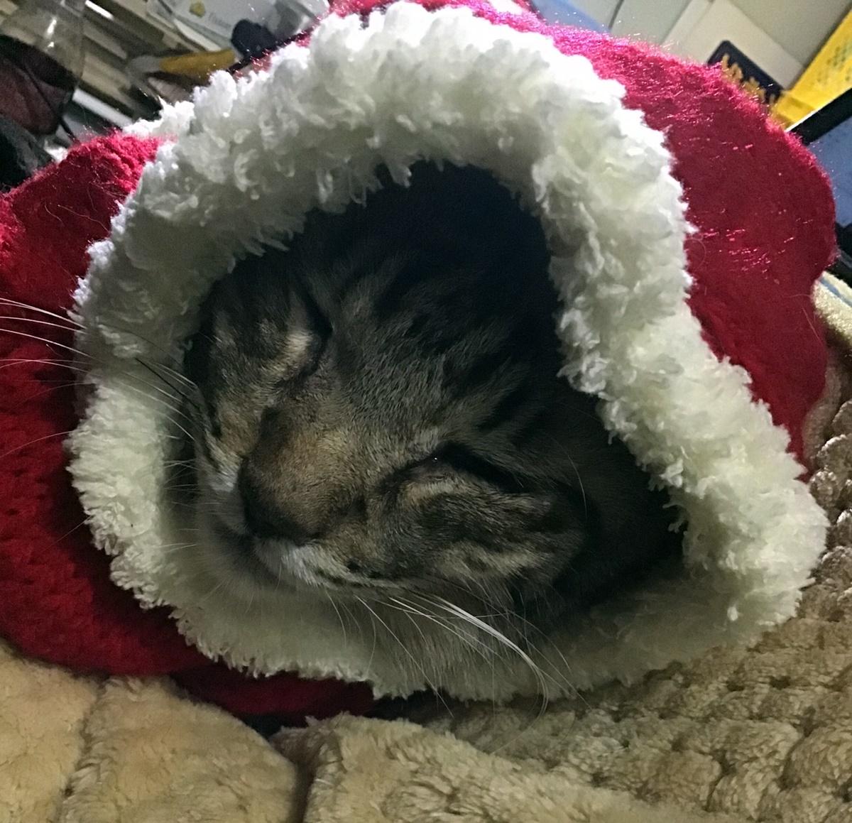サンタ姿で眠る猫