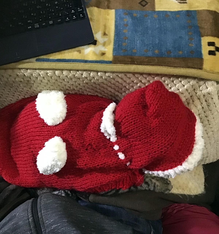 膝の上で寝るサンタの着ぐるみ猫