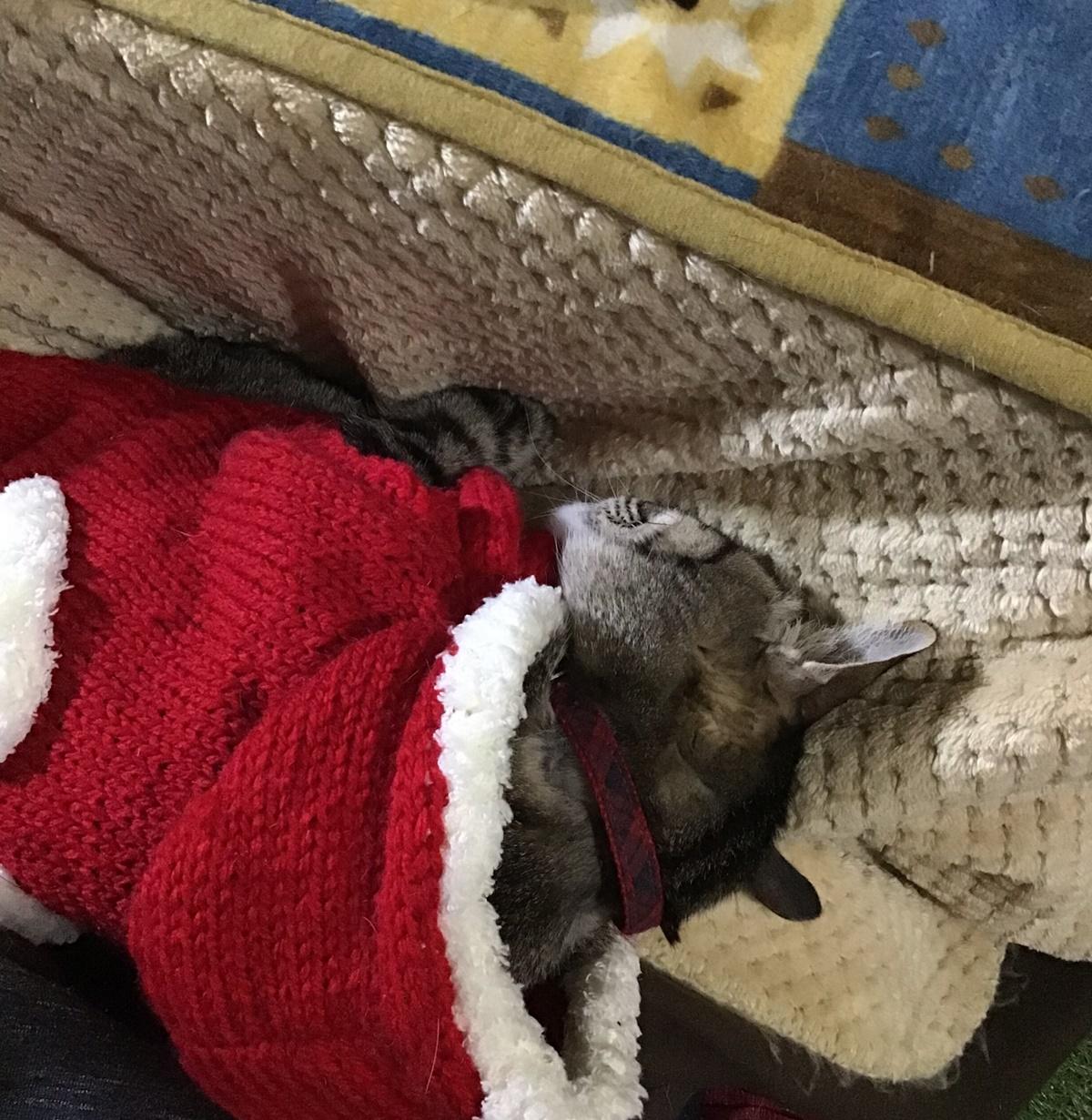 膝の上で眠るサンタクロース