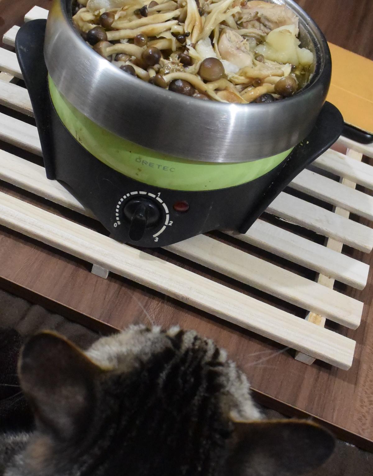 鍋が食べられない猫