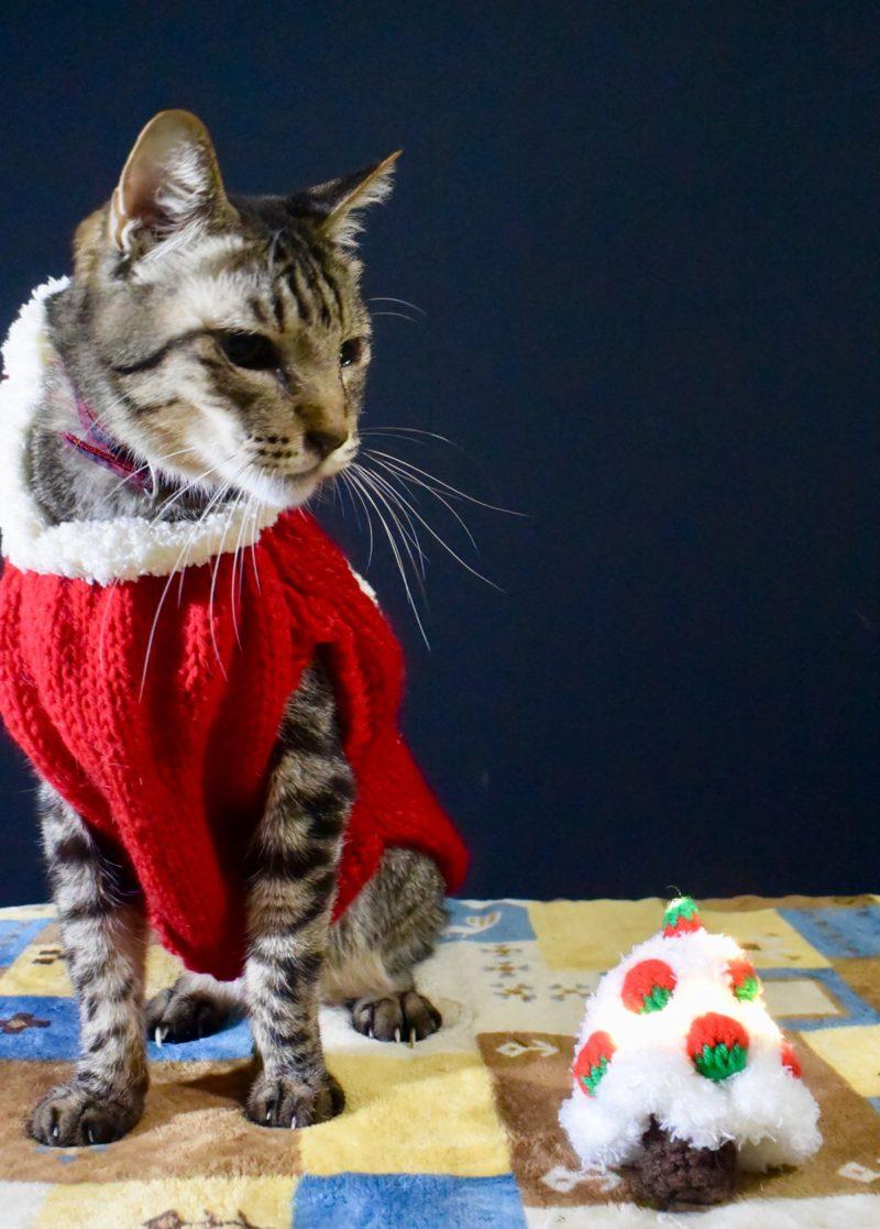 猫と手編みのクリスマスツリー(イチゴ)
