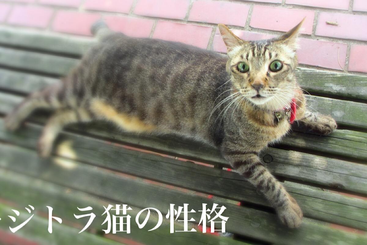 キジトラ猫の性格