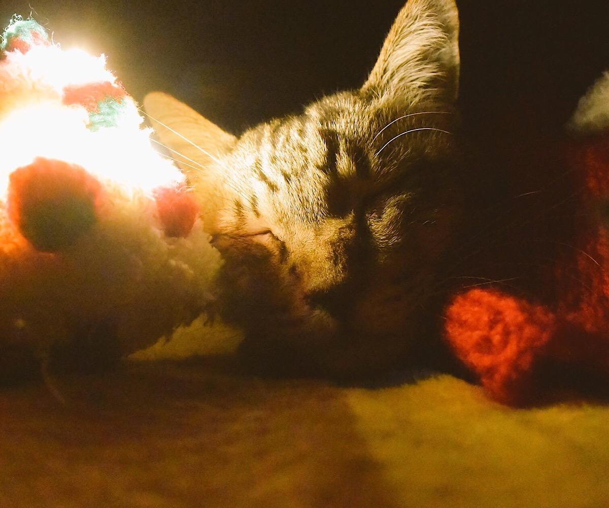 クリスマスツリーと眠る猫