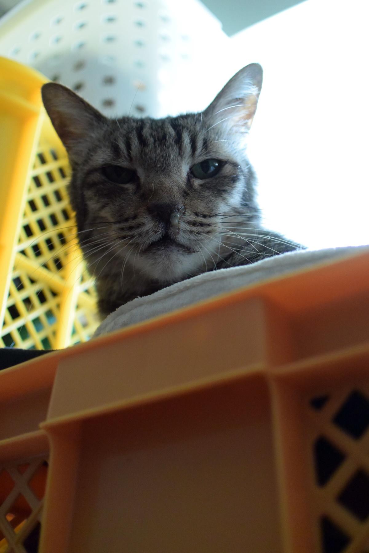 僕を見下す猫