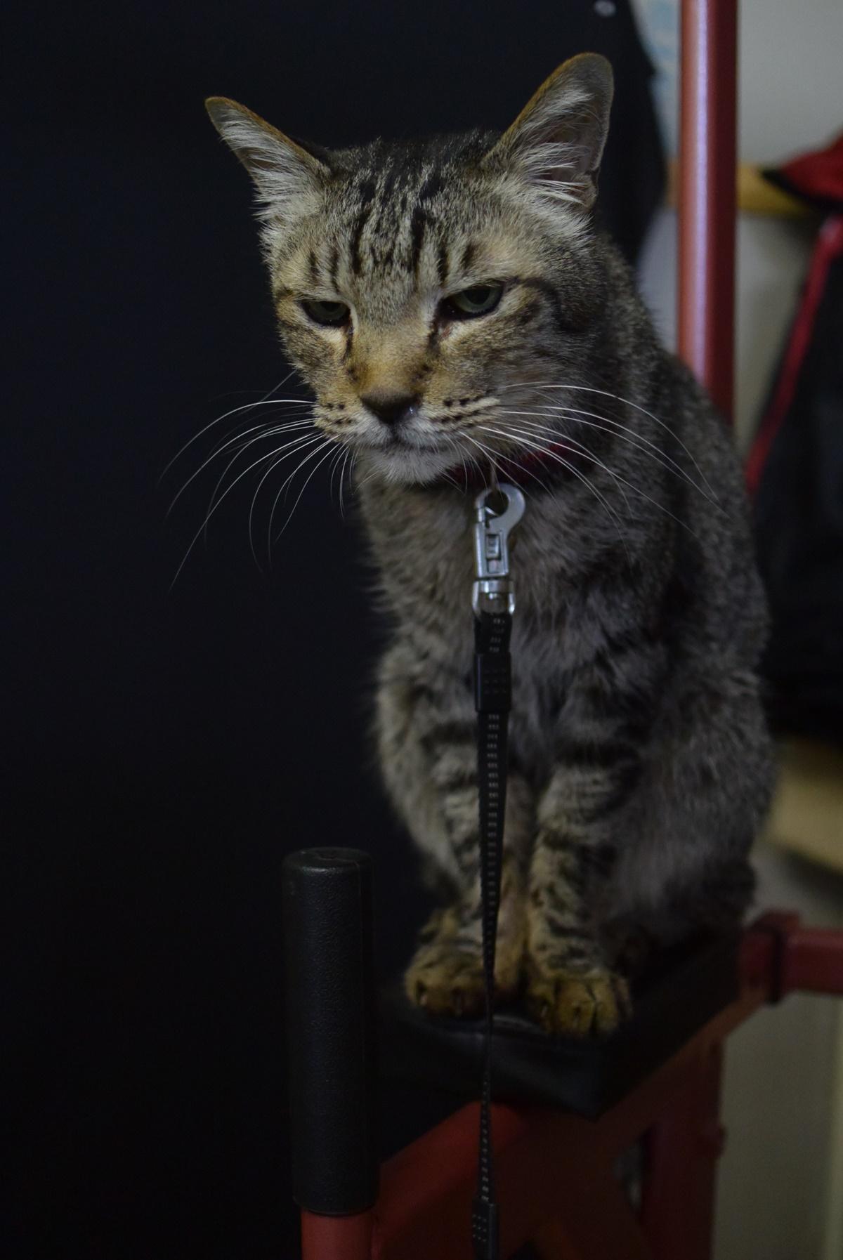 懸垂マシンと猫