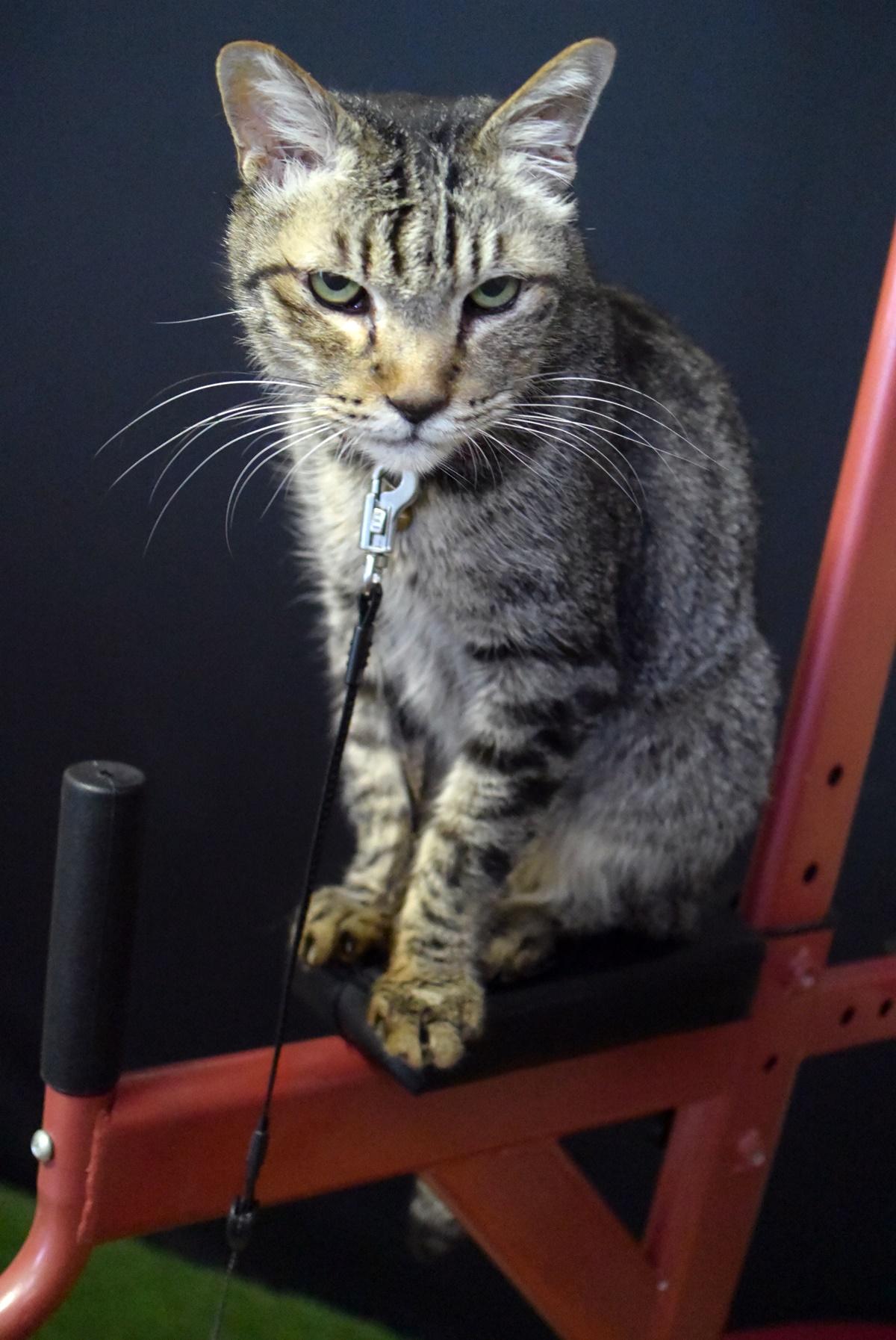 懸垂マシンの上の猫