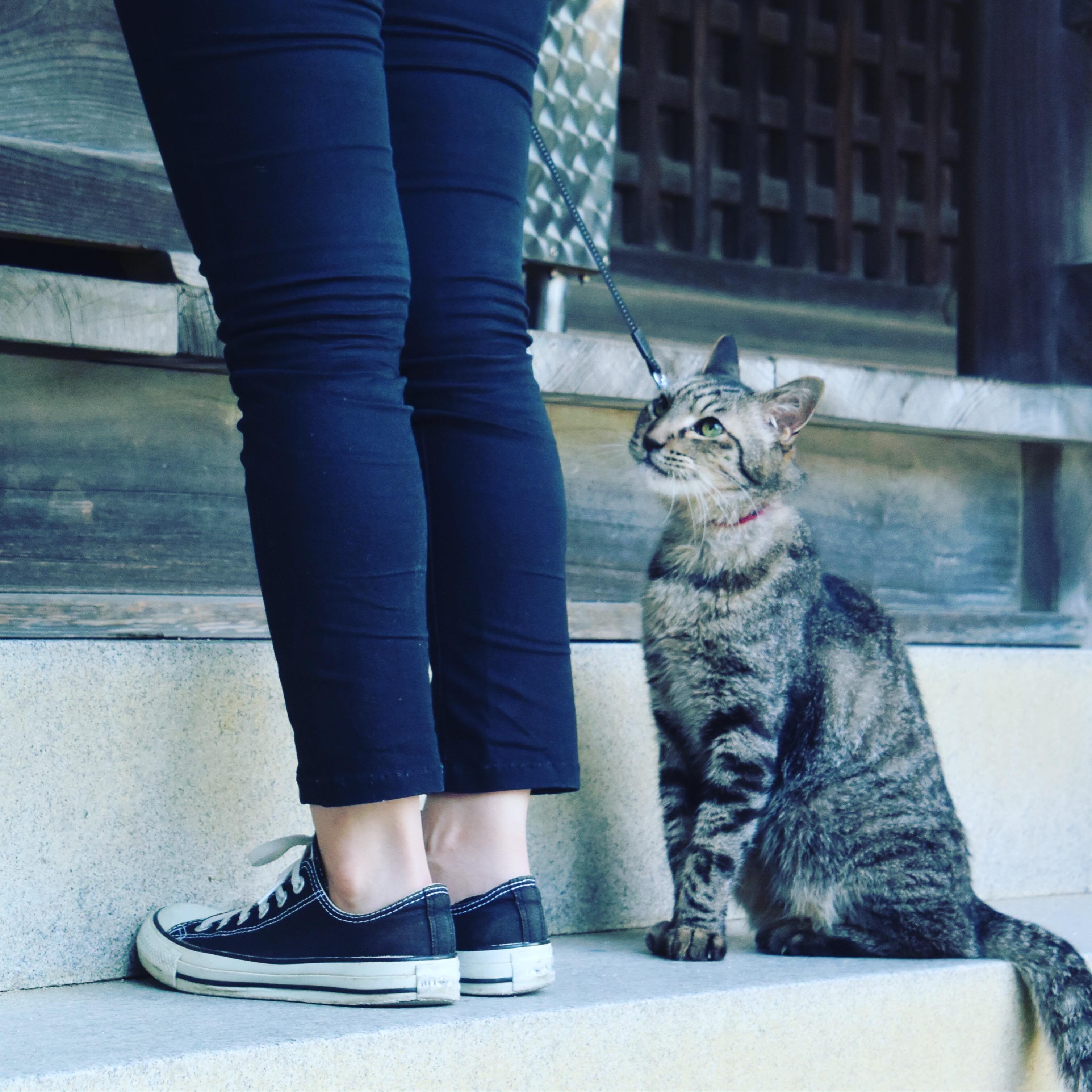 八栗寺と猫