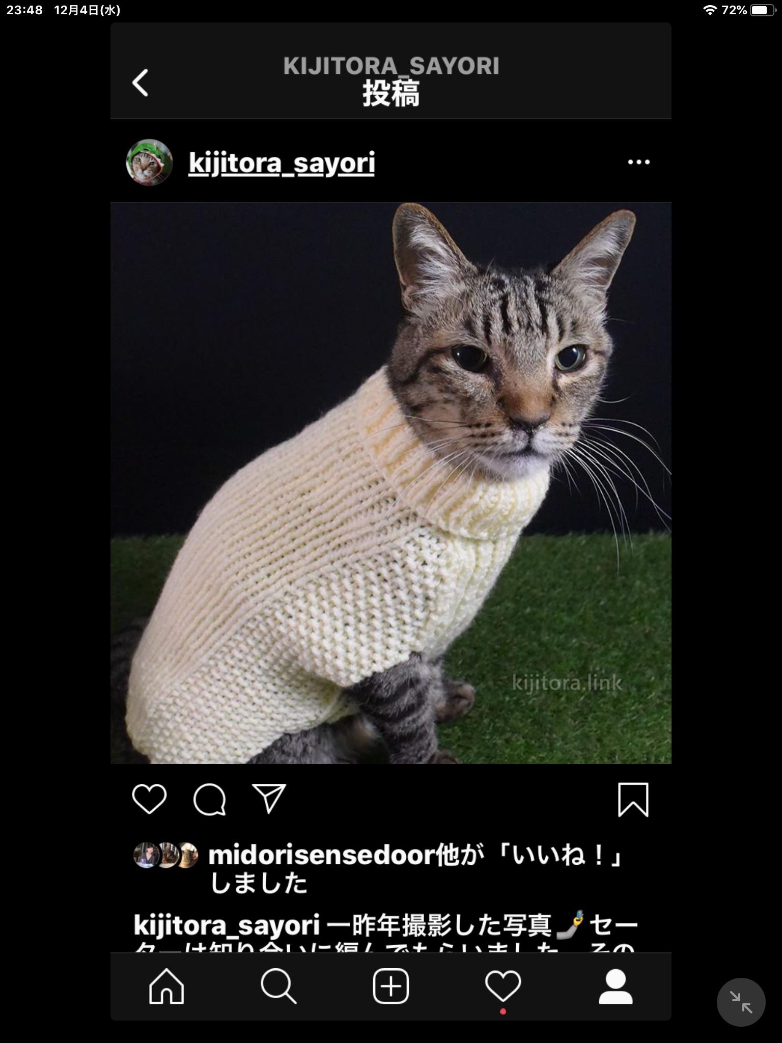 セーターを着た猫