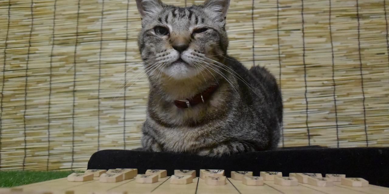 猫の将棋(掛かって来にゃさい)