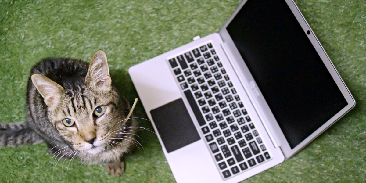 ノートPCと猫