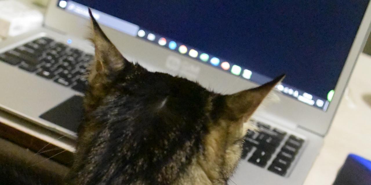 パソコン画面を見る猫