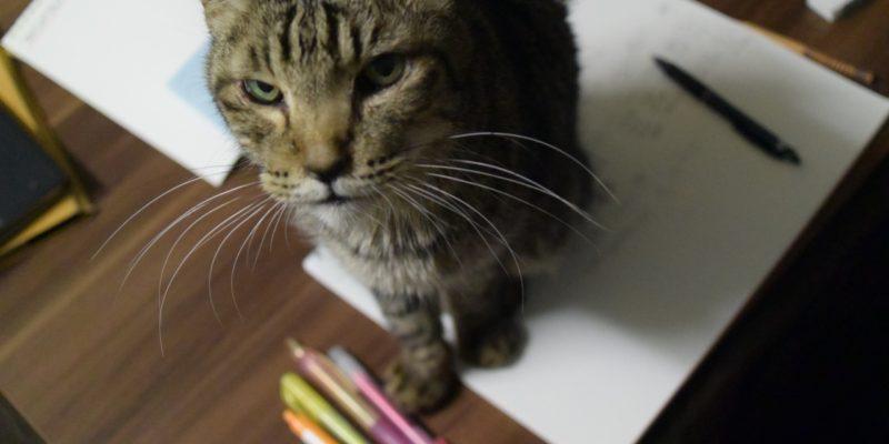 マインドマップ書いていたら案の定邪魔に来た愛猫