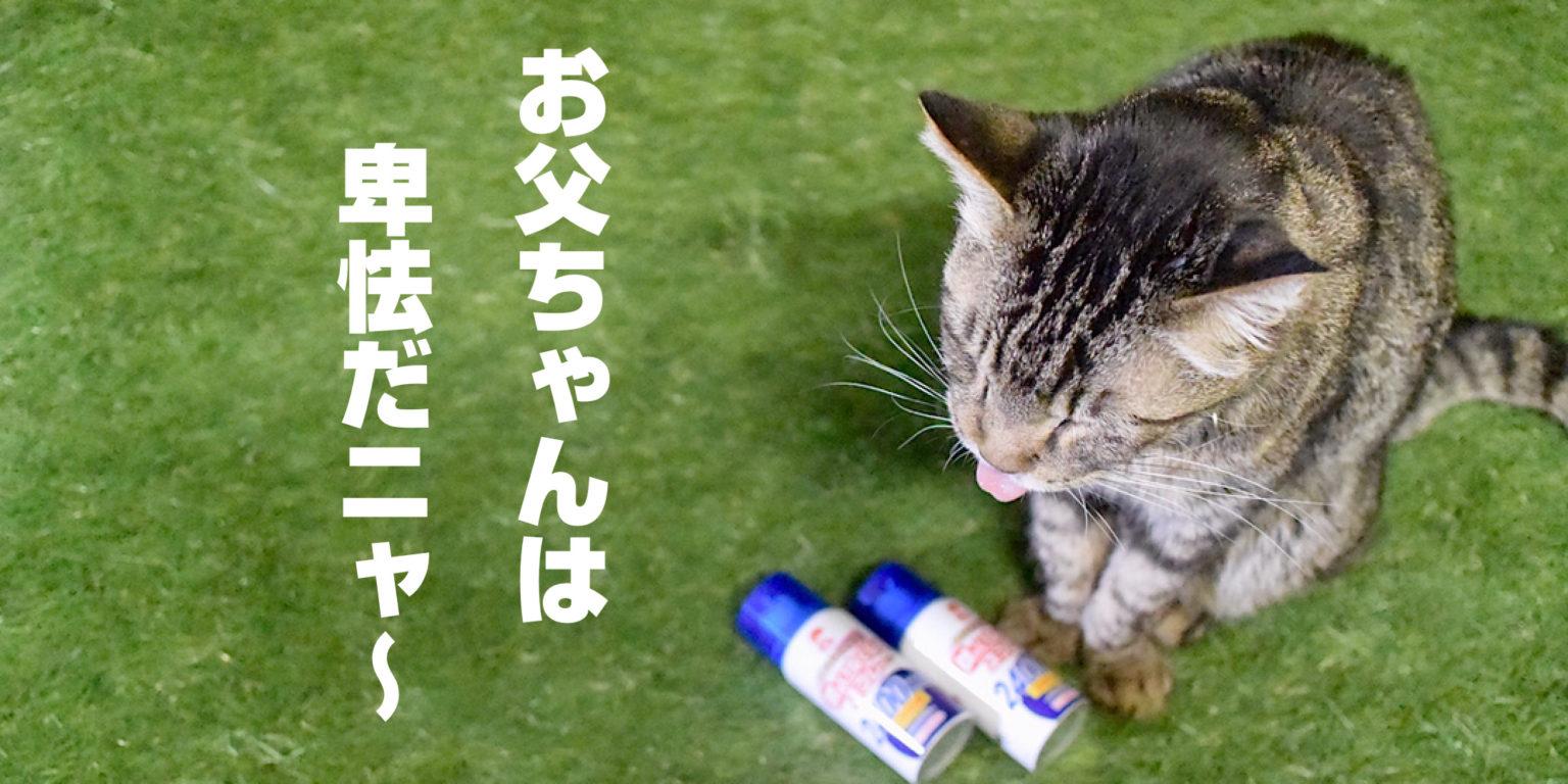 蚊がいなくなるスプレーを見つめる猫