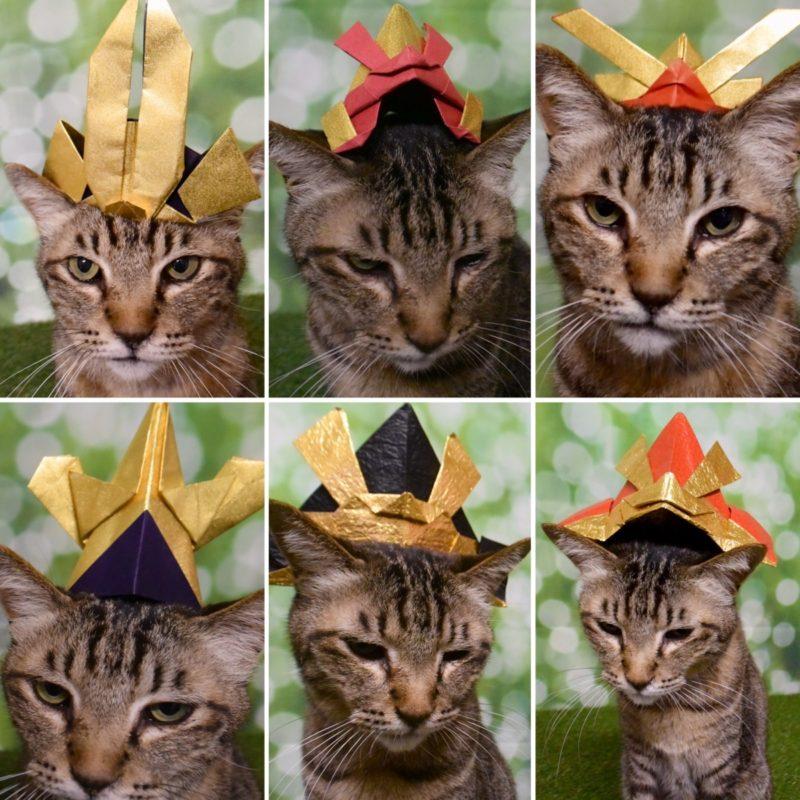 ゴージャスな折り紙カブトを被った猫