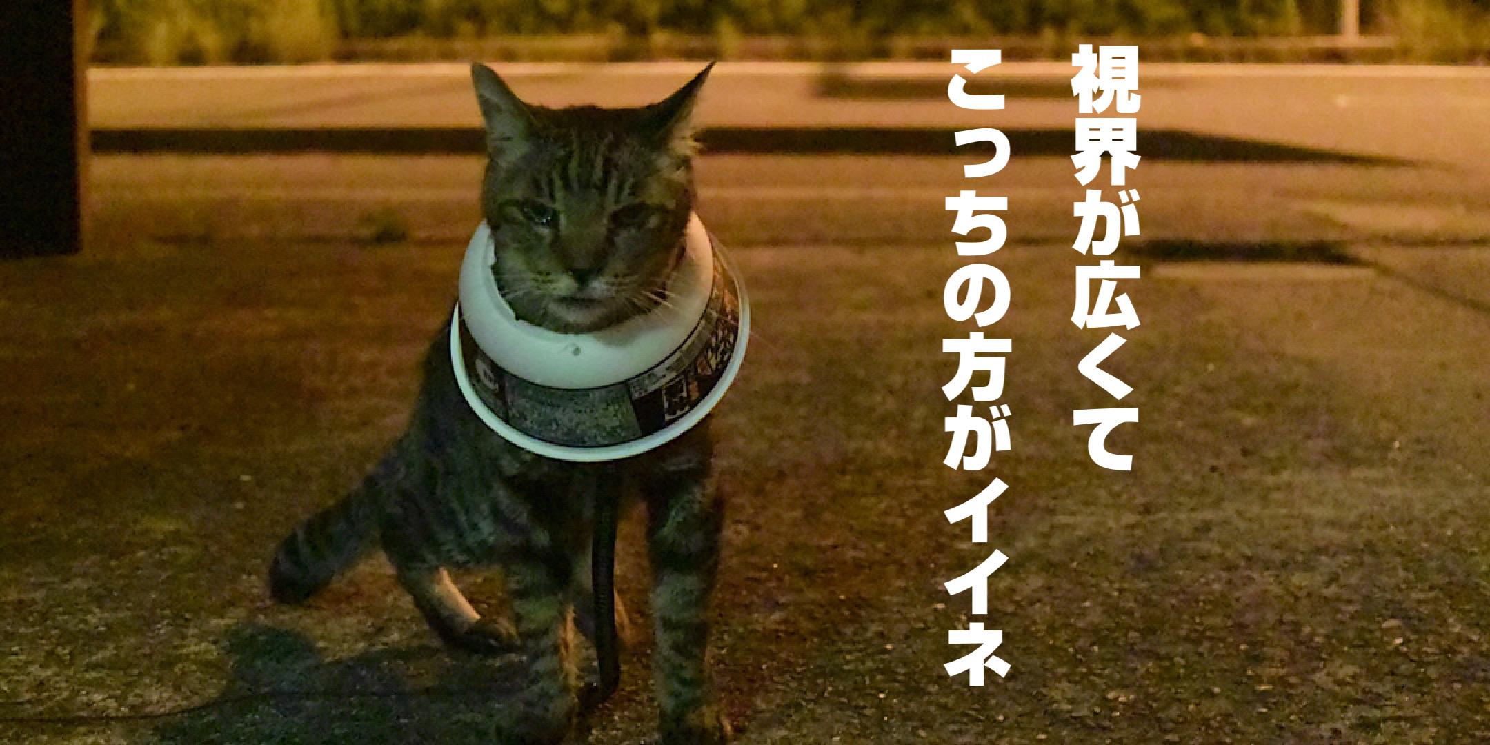 どん兵衛カラーで歩く猫