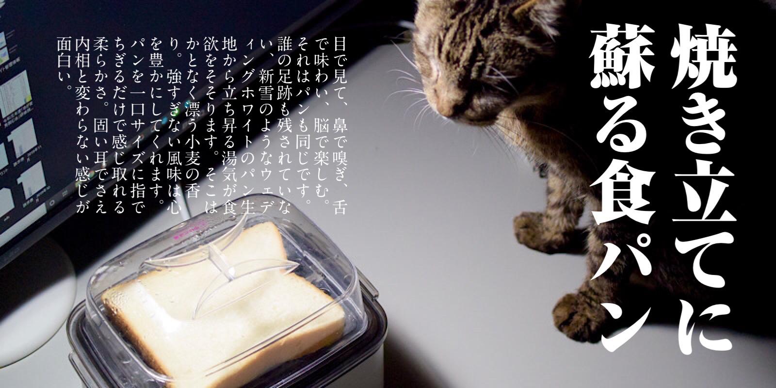 蒸し器の中の食パンと猫