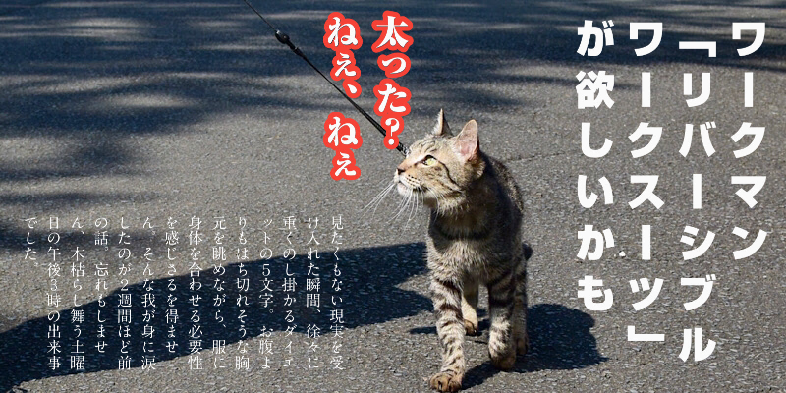 猫と散歩「ねぇねぇ、太った?」