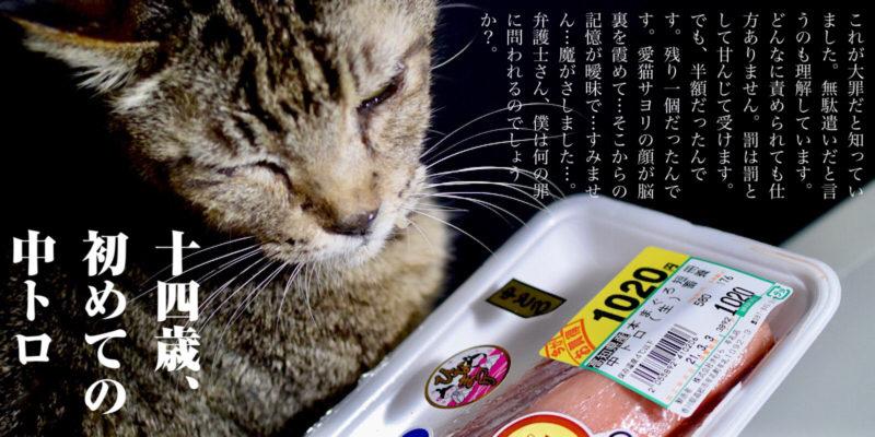 マグロ中トロ半額シールを見つめる猫