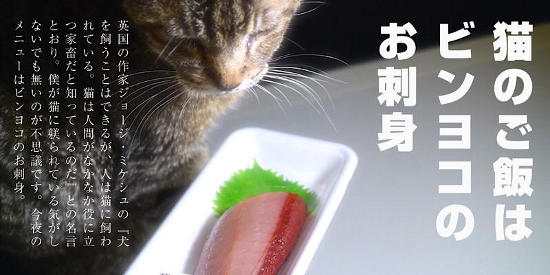 猫のご飯はビンヨコのお刺身