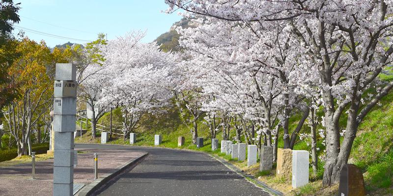 牟礼石匠の里公園(桜並木)