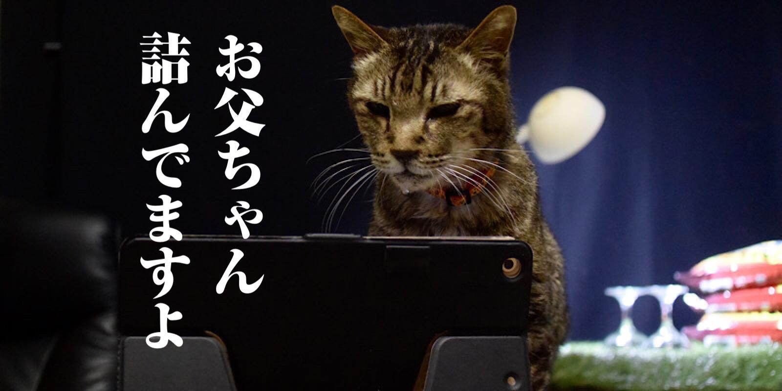 iPadを見ているネコ