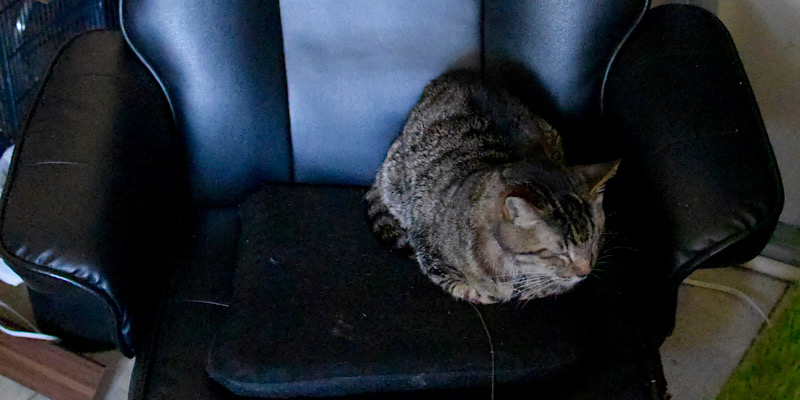 リクライニングチェアを独占する猫