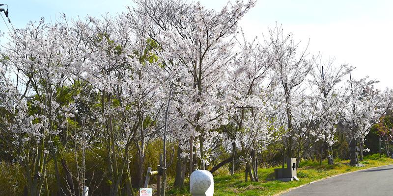 あじ竜王山公園(彫刻広場と竜王のサクラ)